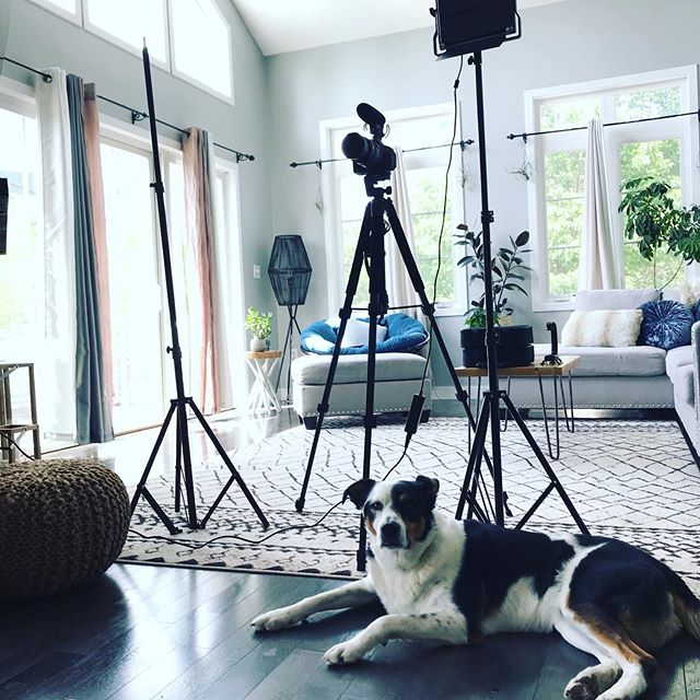 All paws on deck for a little content-creation sesh today! 🐶🐾 #sacredspace #sacredspacedesign #puppers #coworkers #cameracrew