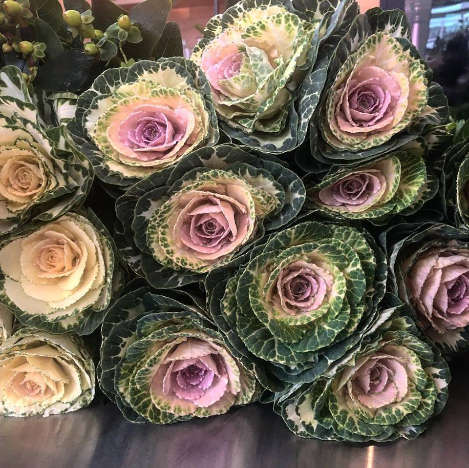 Cabbage roses.jpg