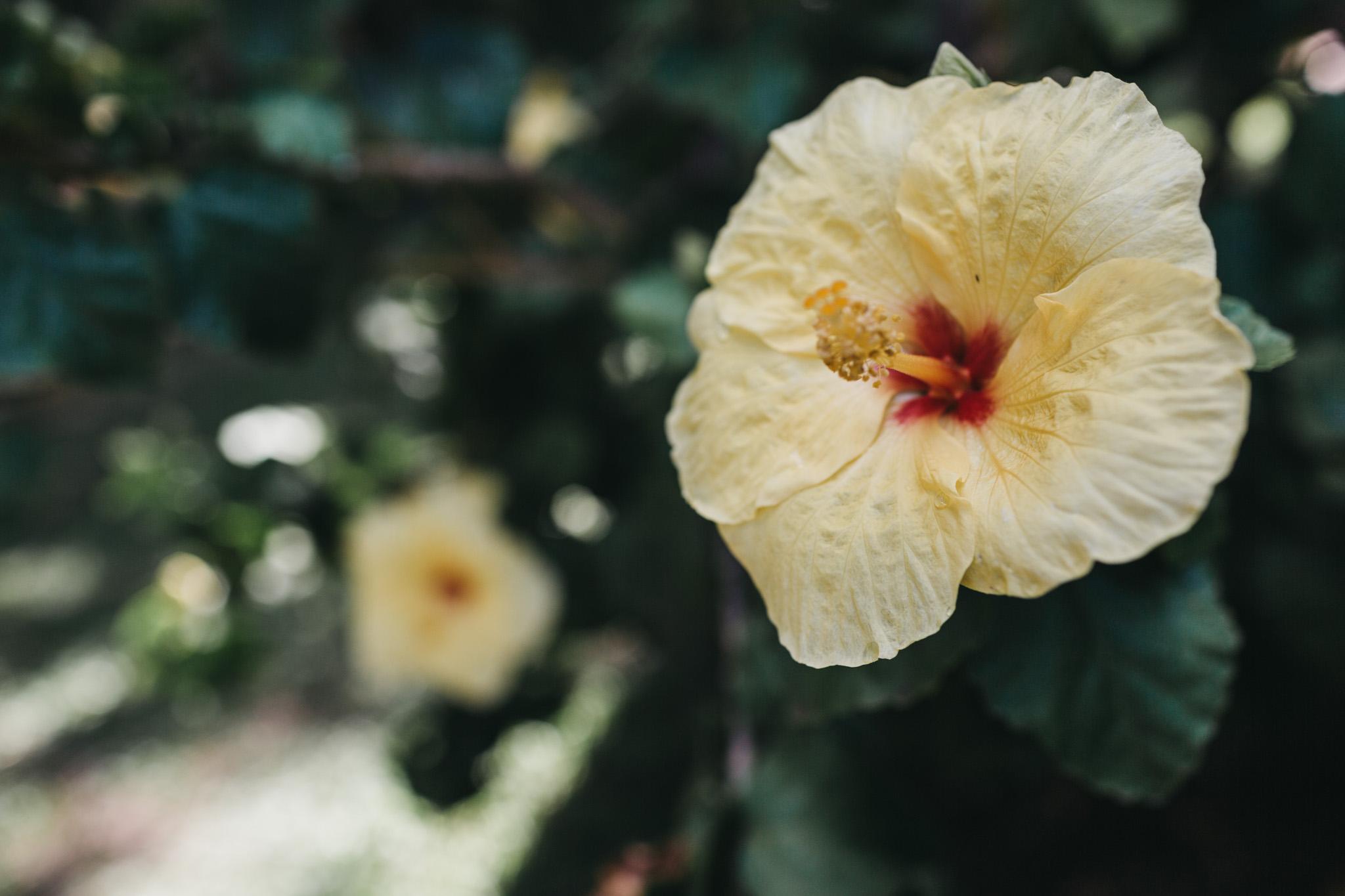 wedding-vow-renewal-hawaii-hochzeit-maui-silberhochzeit-karol-and-jens_100.jpg