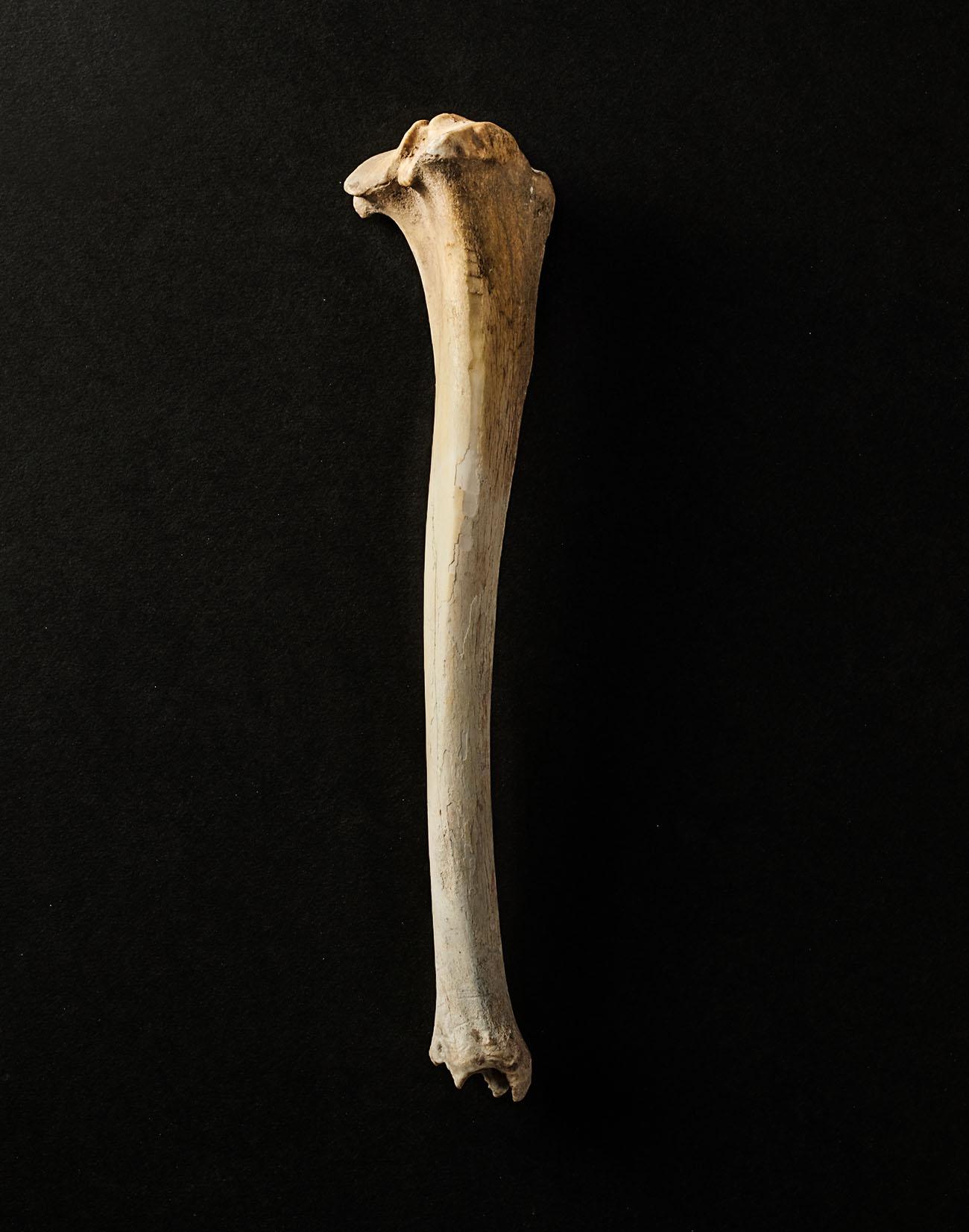 TS_Bone.jpg