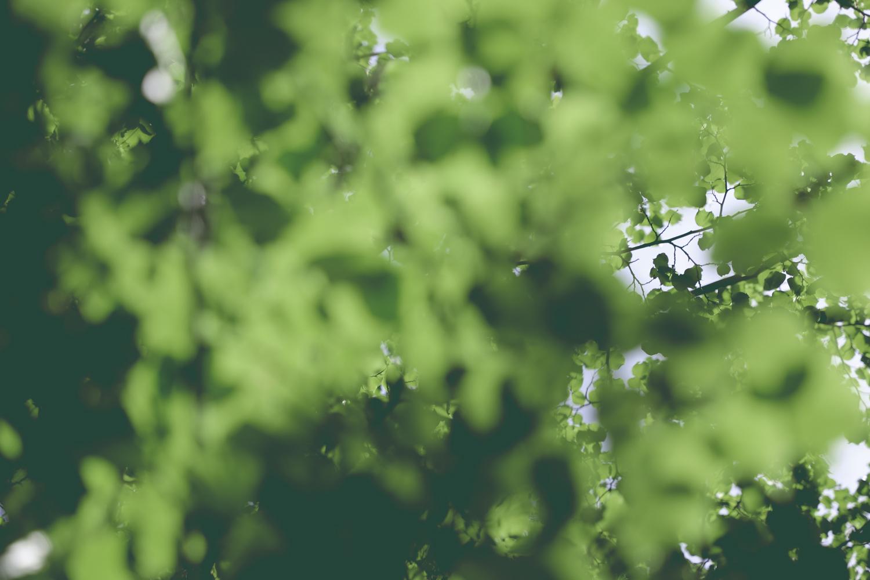 Neighbourhood-Leaves_01.jpg