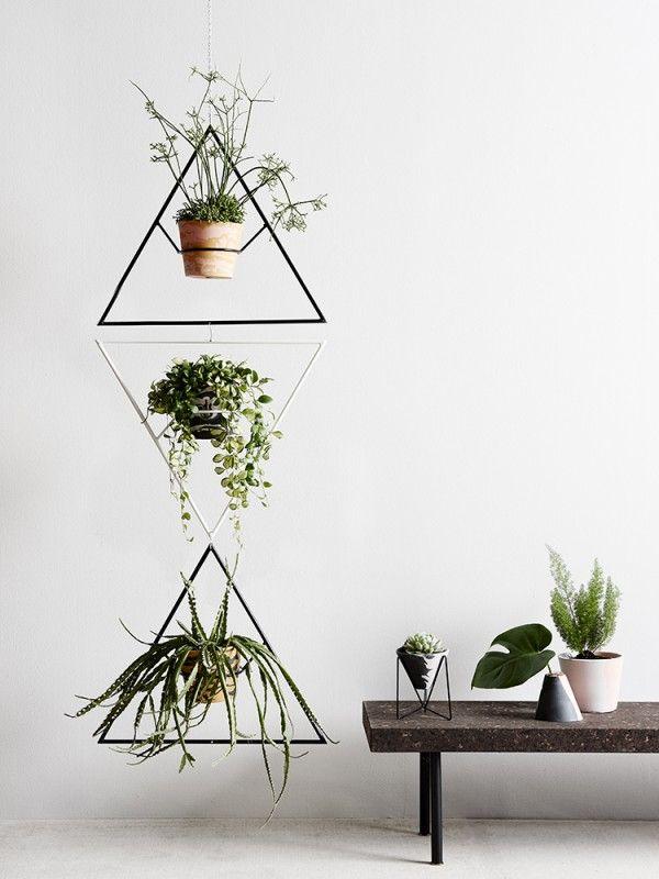 indoor plant.jpg