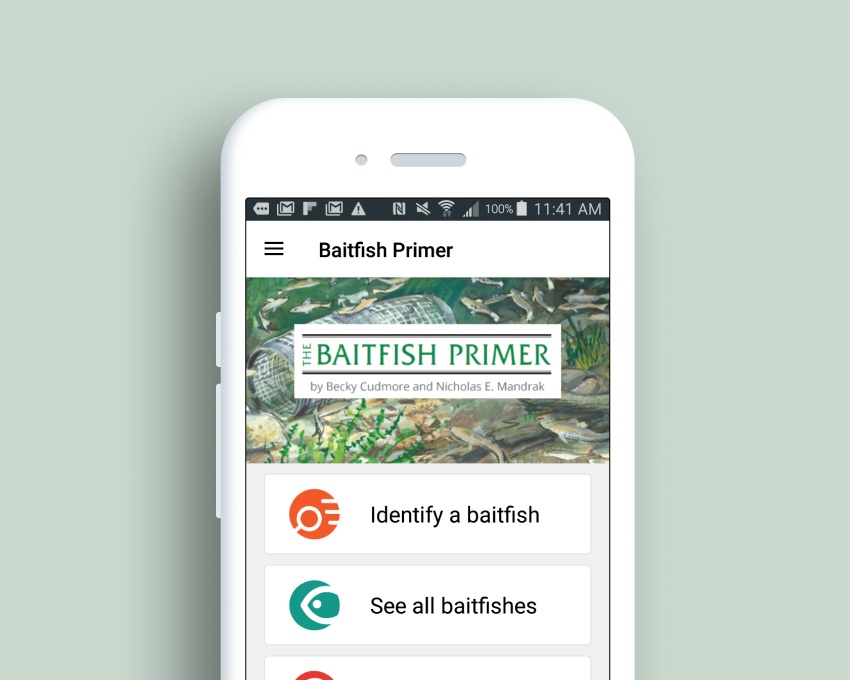 Baitfish Primer - I help fishery scientists and fishing hobbyist identify invasive species using my design powersClient: Department of Fisheries and Oceans Canada