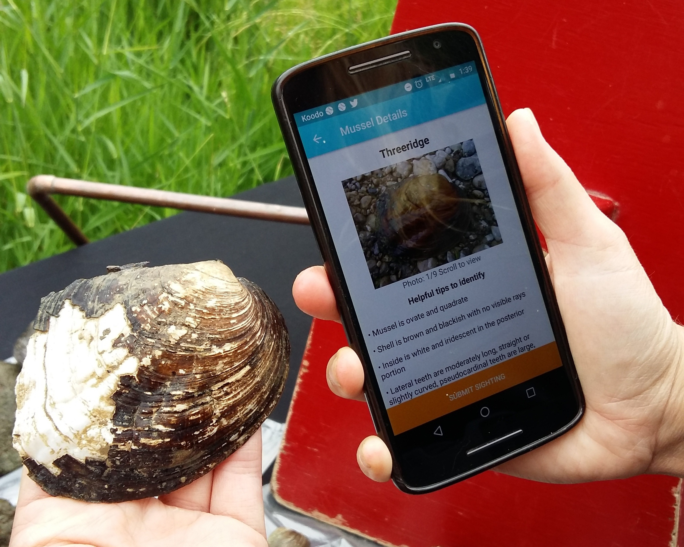 Clam Counter - I collaborated with Toronto Zoo and government scientists to design and develop an app that helps them record and track freshwater mussel species.Client: Toronto Zoo