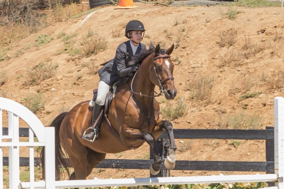"Look at us go! We jumped things! We competed in the 2' and 2'3"" hunters sans changes because that's when life got a little too spicy."