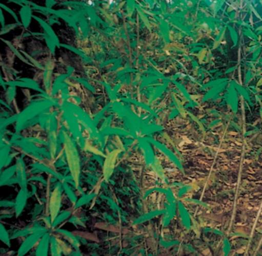 1.plant.jpeg