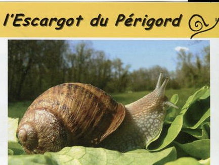 folder+escargot.jpg