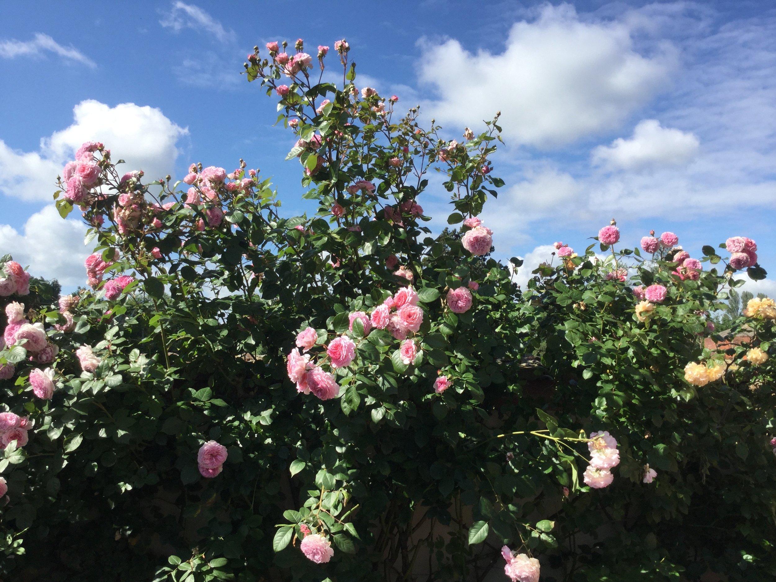 AH gardens - 7.jpg