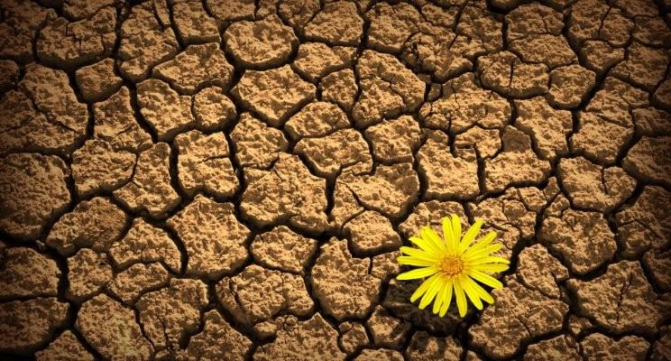 Flower in Desert.jpg
