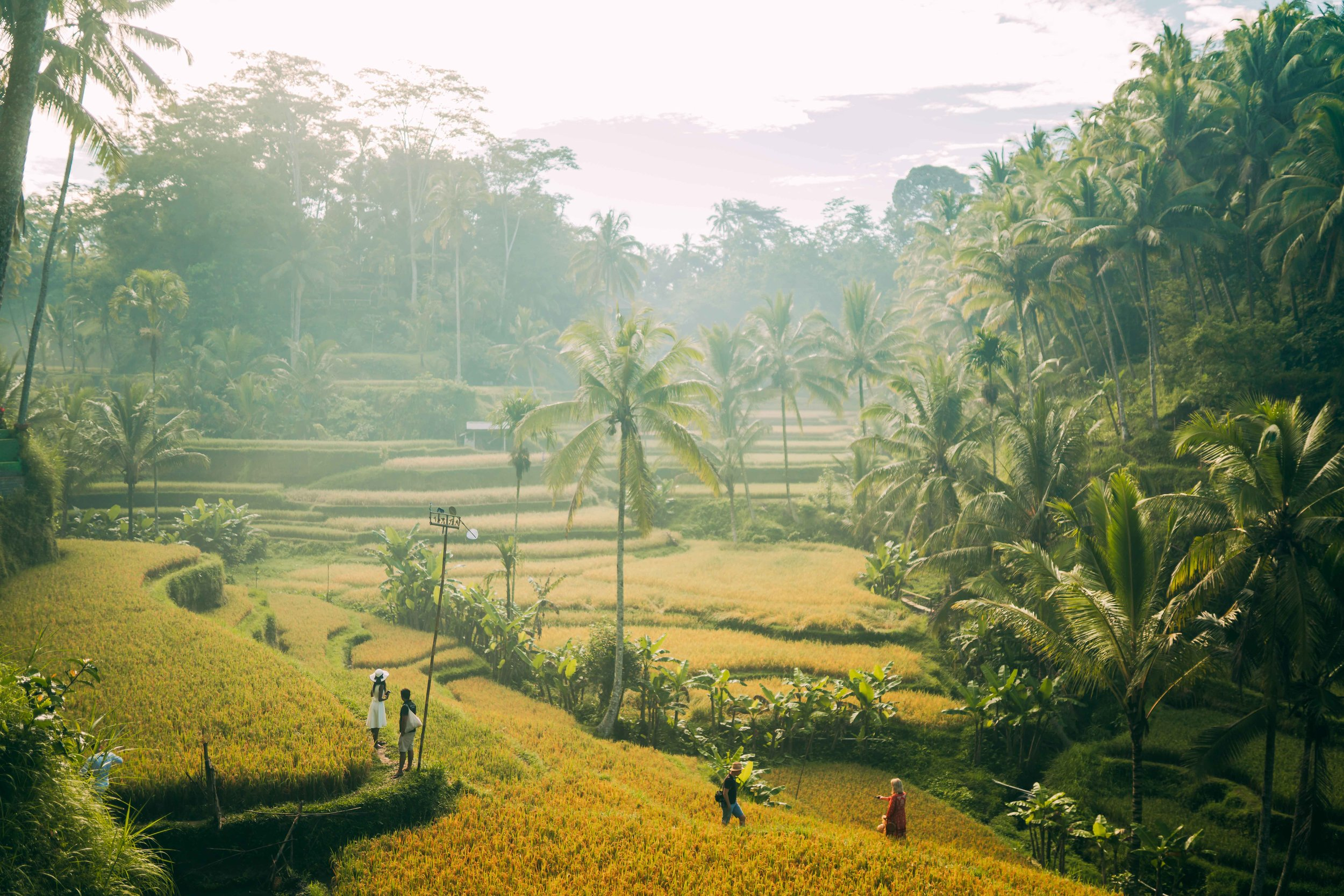 rice-fields-bali.jpg