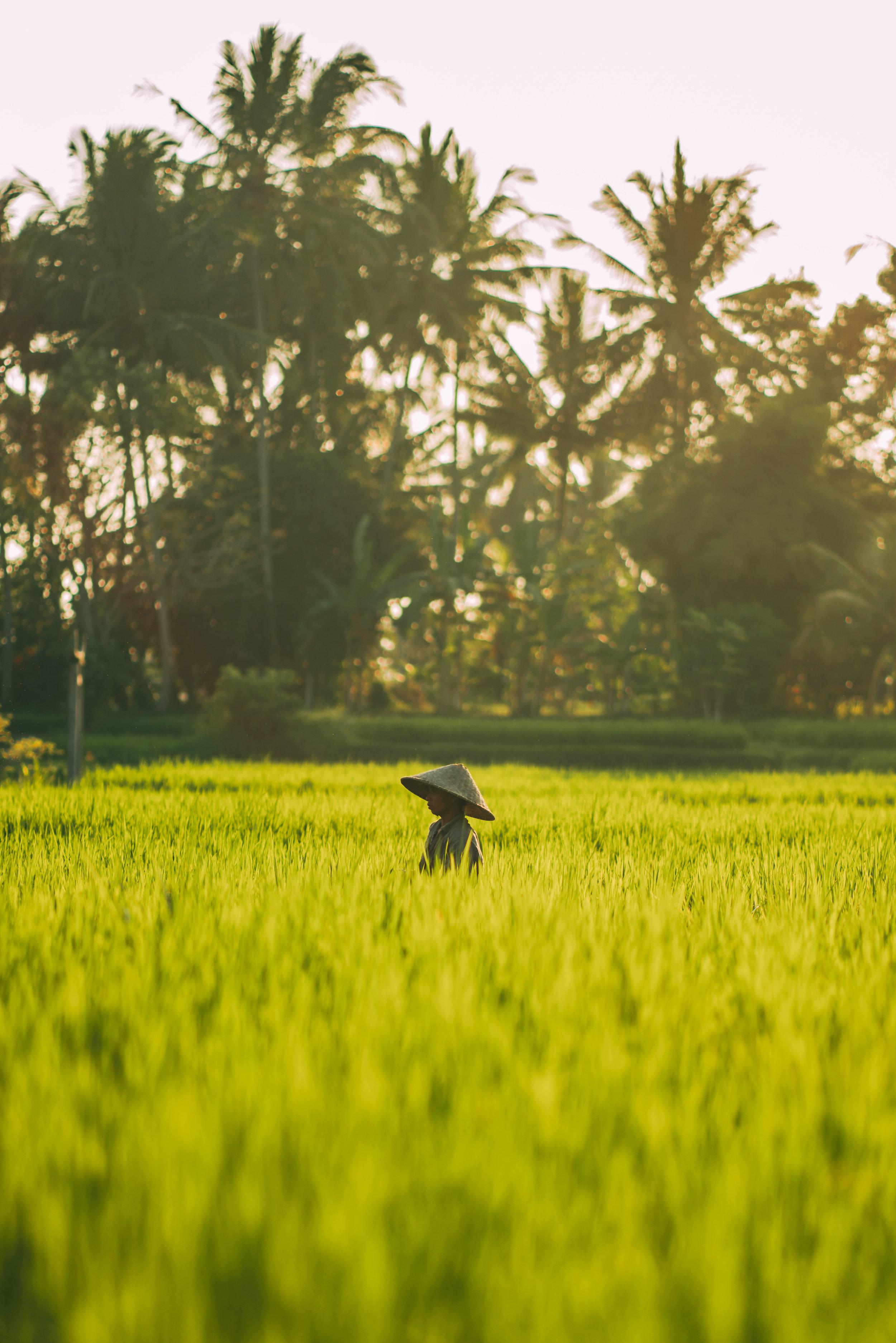 rice-worker-bali.jpg