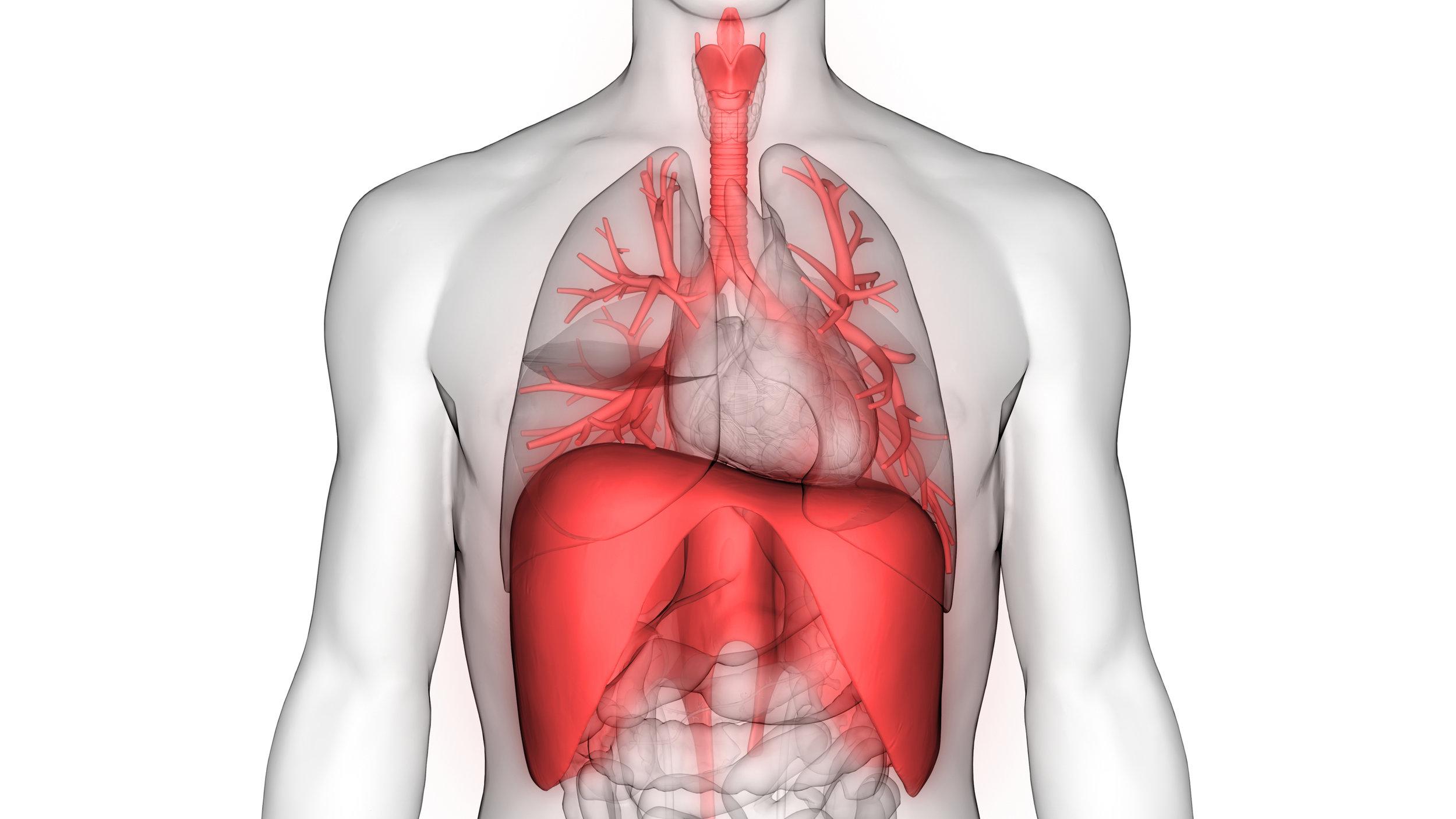 Breathinganatomy.jpg