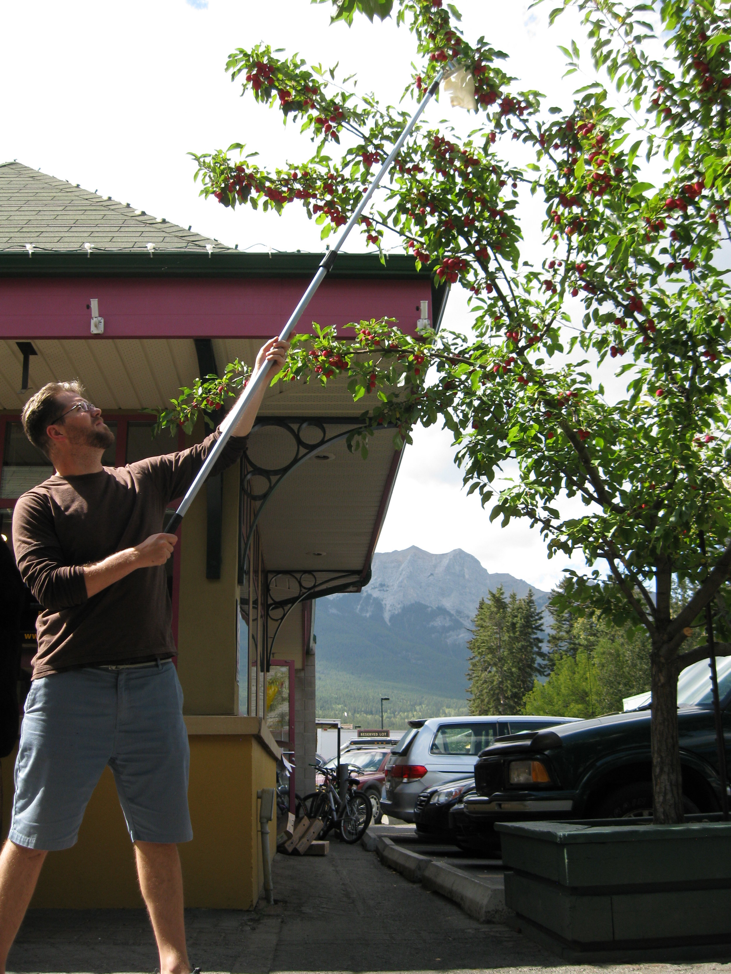 Tyler demonstrates how to use our extendable fruit-picking equipment.