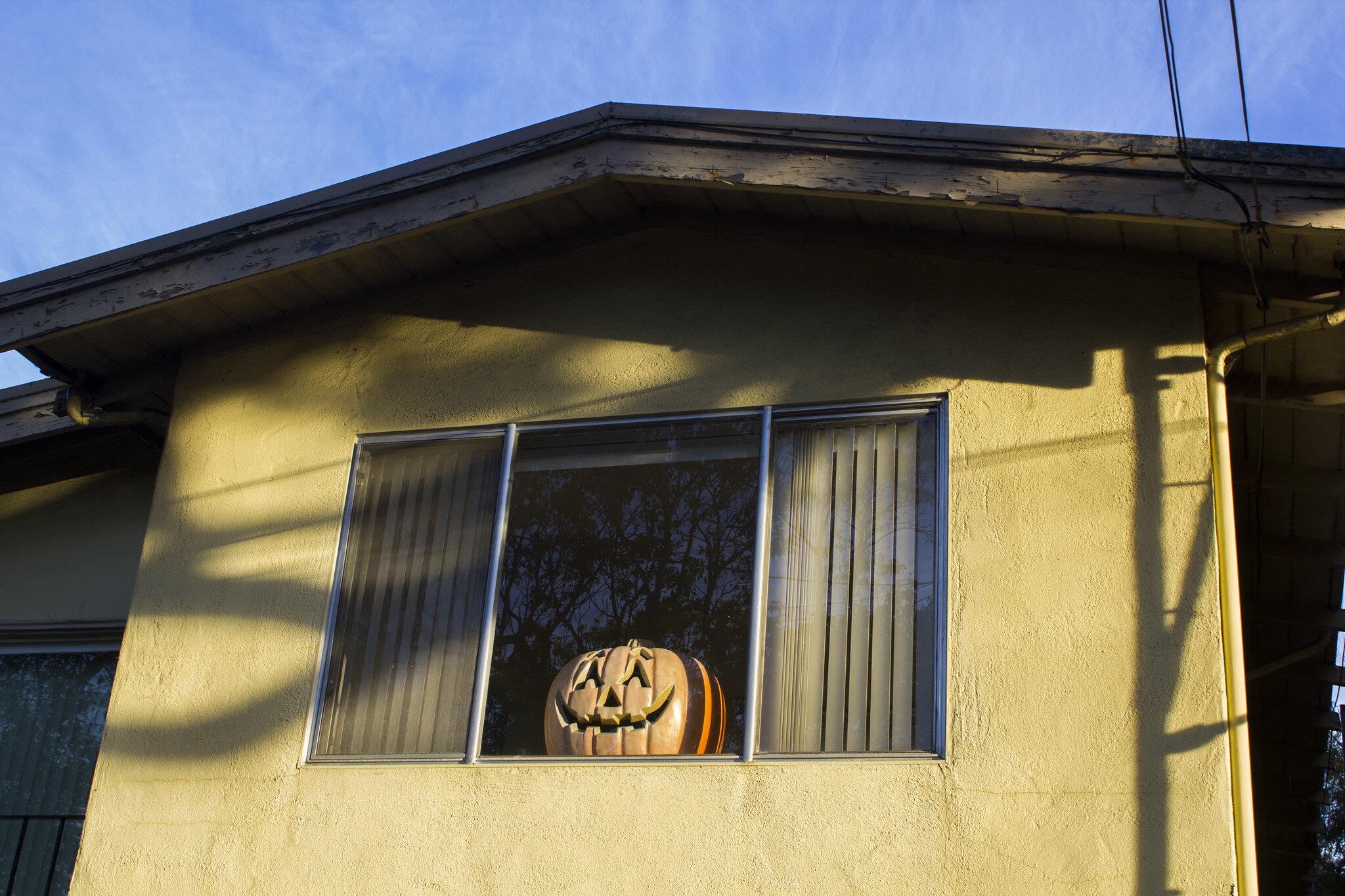Keep your doorstep bear free by placing pumpkins inside windows