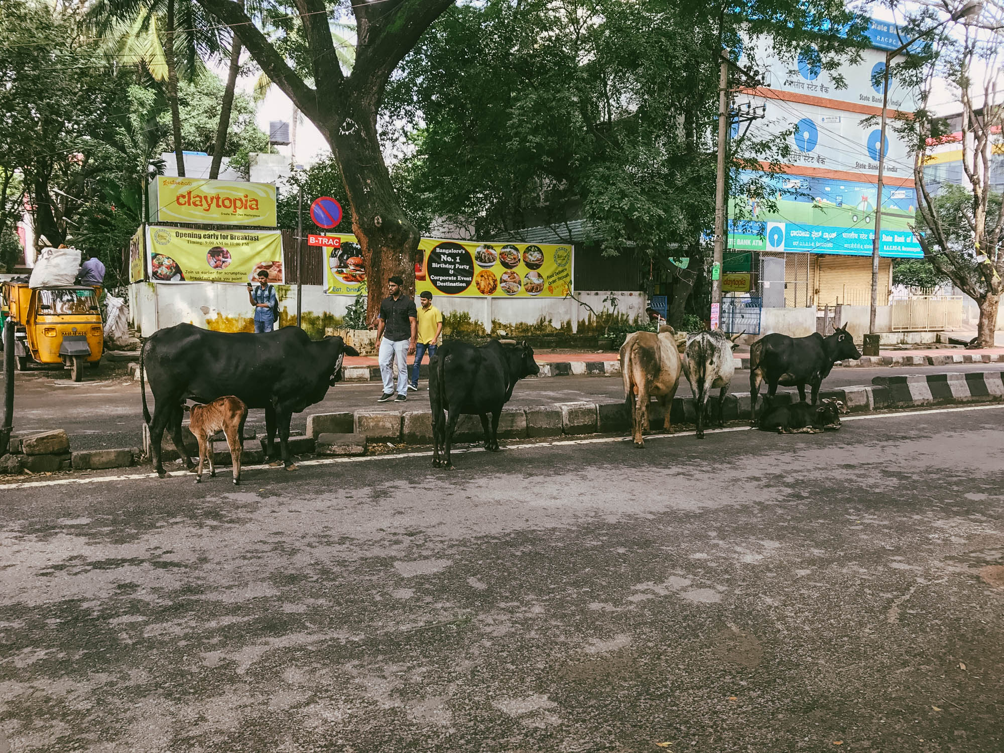 Normal commute in Bangalore - nothing to see here
