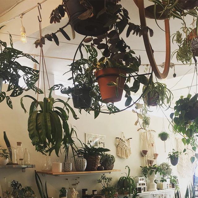 All this jungle is missing are the butterflies. What's better than an afternoon spent making terrariums? Maybe some outdoor time, but I can't think of many activities better to do indoors. 🙏🏽🦋🌱