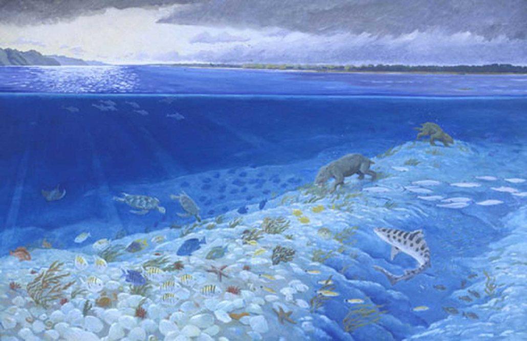 Pectin Reef Prehistoric Geologic