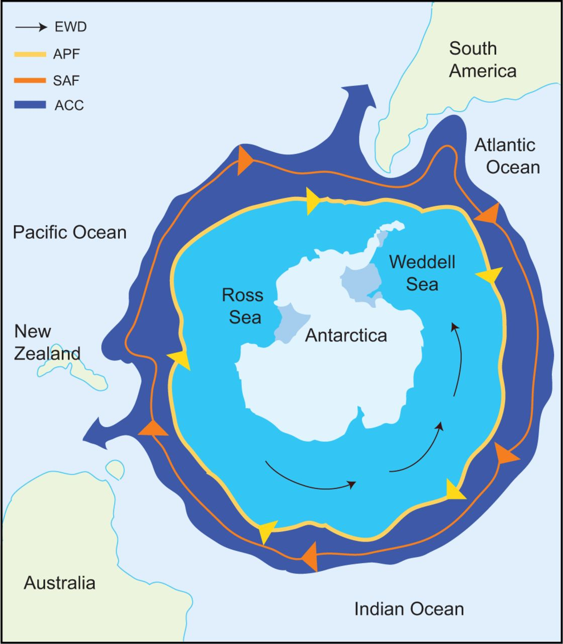 Figure 4-  Map depicting the geographic isolation of Antarctica. The Antarctic Polar Front (APF) hugs the Southern Ocean waters while moving in a clockwise direction with the Antarctica Circumpolar Current (ACC) immediately outside the APF. (figure from Beers and Jayasundara 2015).