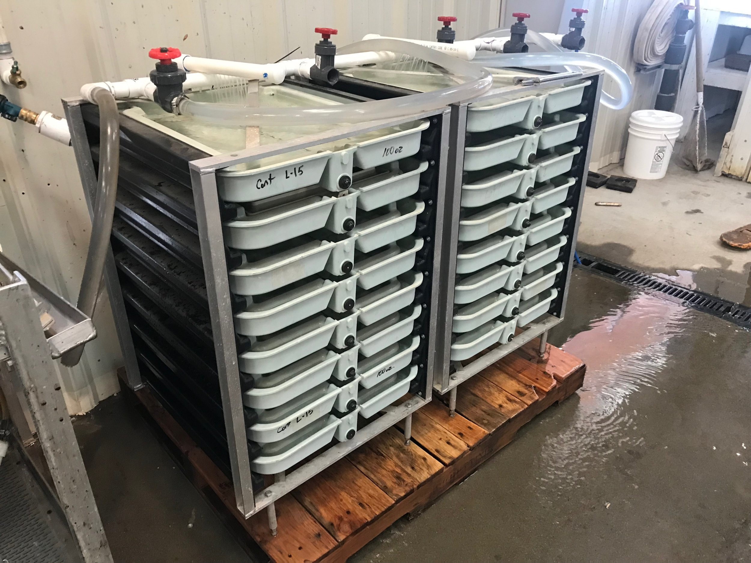 Upright incubators - Embryos develop in these stacks until after hatching