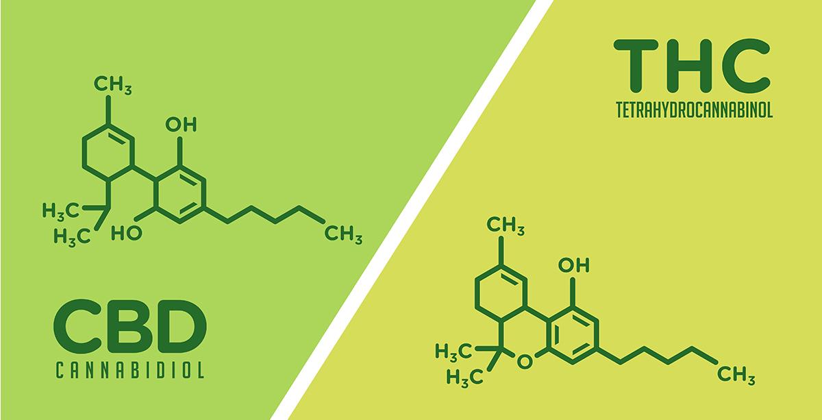 Does Hemp Contain THC or just CBD? .jpg