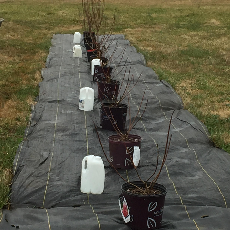 Perennial Planting 2.JPG