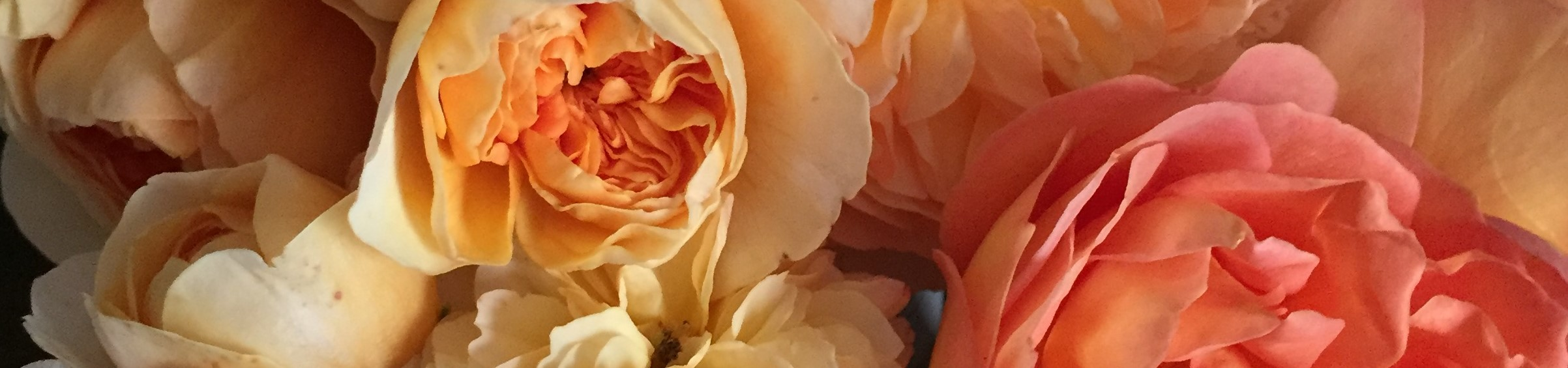 Banner Picture- Roses.jpg