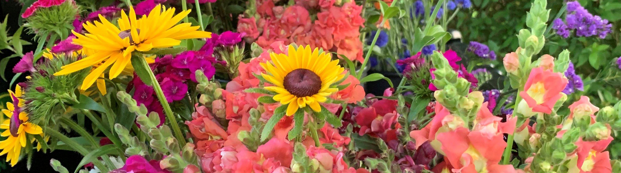 June Flowers.JPG