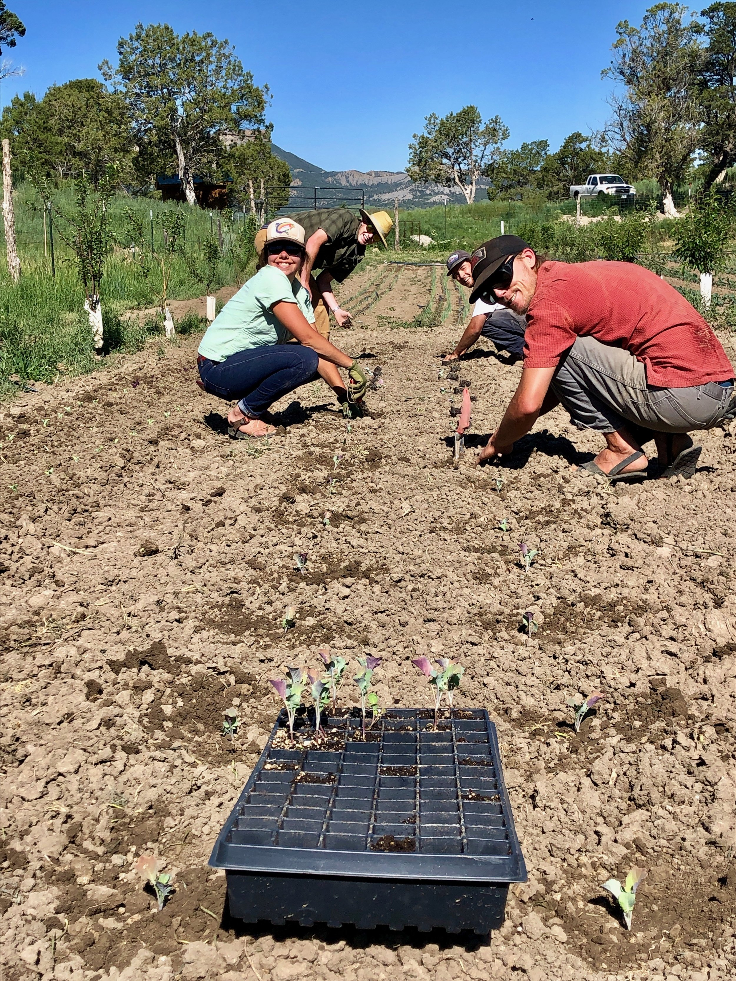 The High Pine farm crew transplanting more broccoli for your future tasting pleasure
