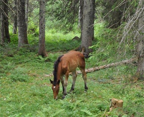 Bavarian Foal.jpg
