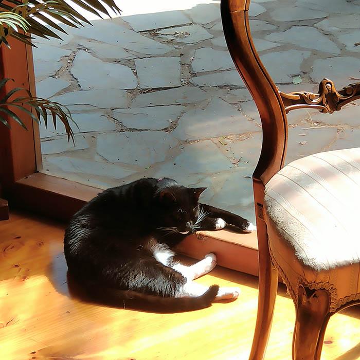 Poppy in a sunbeam…