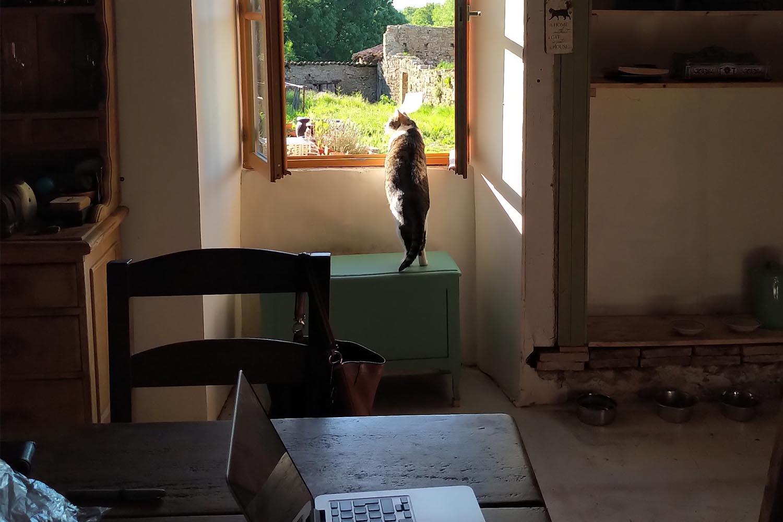 House Sitting -