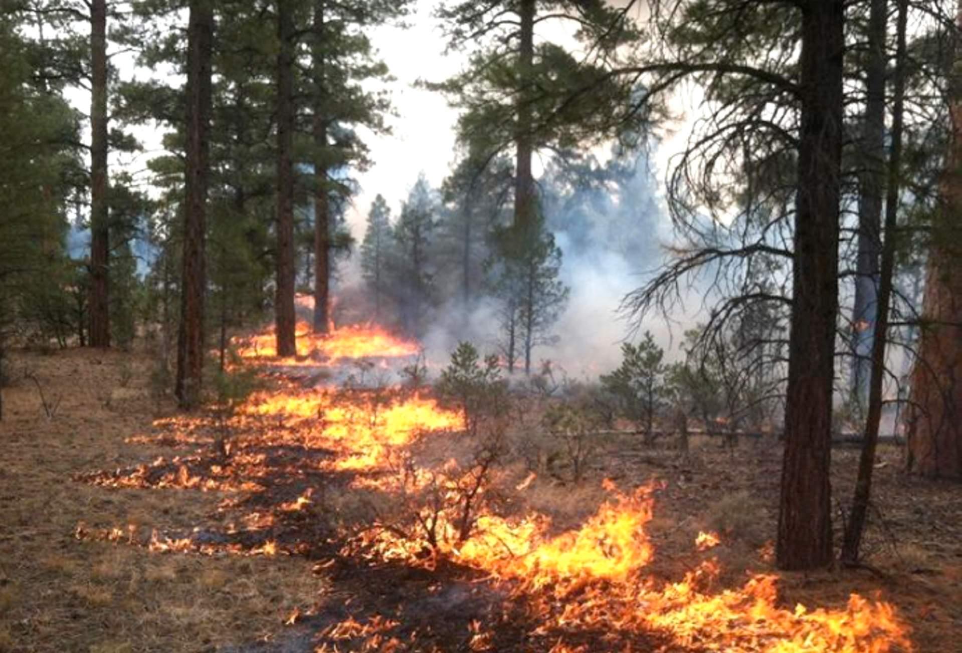 Prescribed burn, Sonoma County, CA