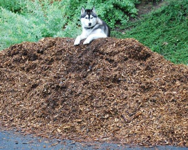 Spring-Mulch-Pile.jpg