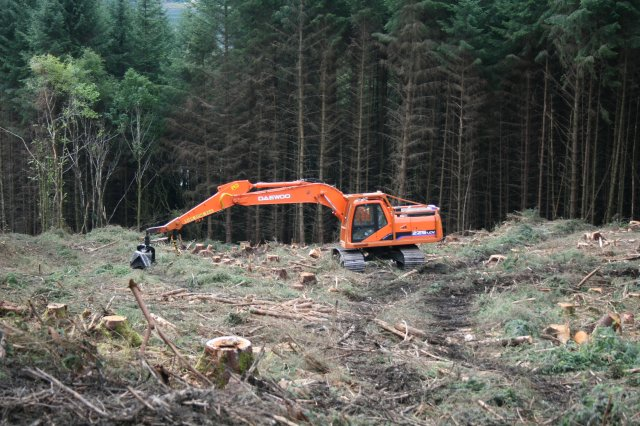 Clear cut forest management