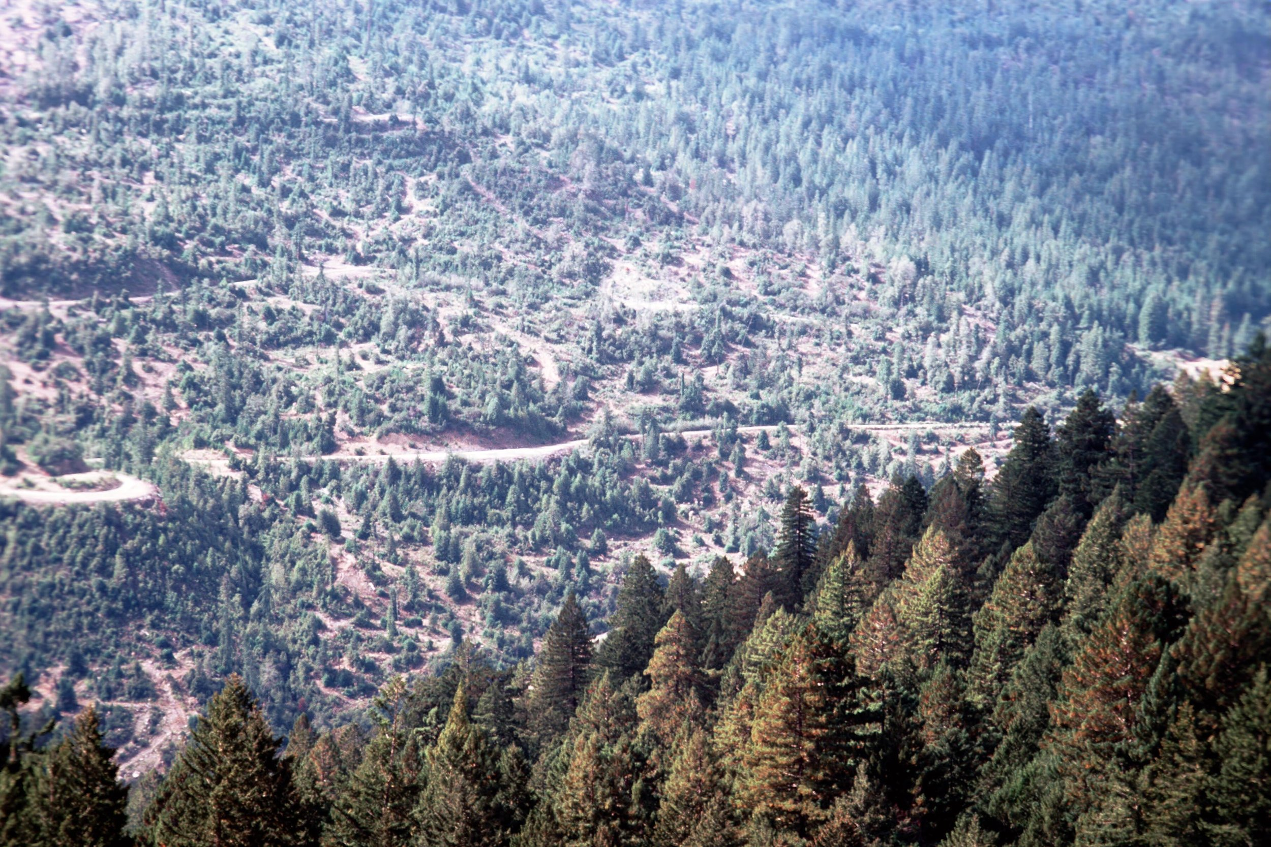 Clear cut at Owl-Creek grove, 1995, Headwaters, Northern Ca. You can see the even age growth in the upper right of this image next to the residue of more recent clear cut logging. The Headwaters Forest became a State Reserve in March of 1999, after the largest forest defense action in U.S. History.