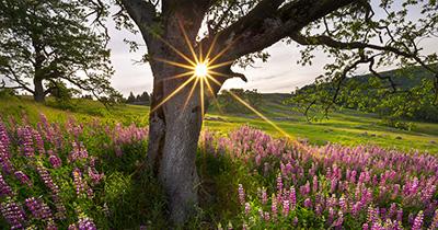 oak-cover.jpg