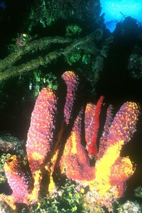 spongecluster.364182529_std.jpg