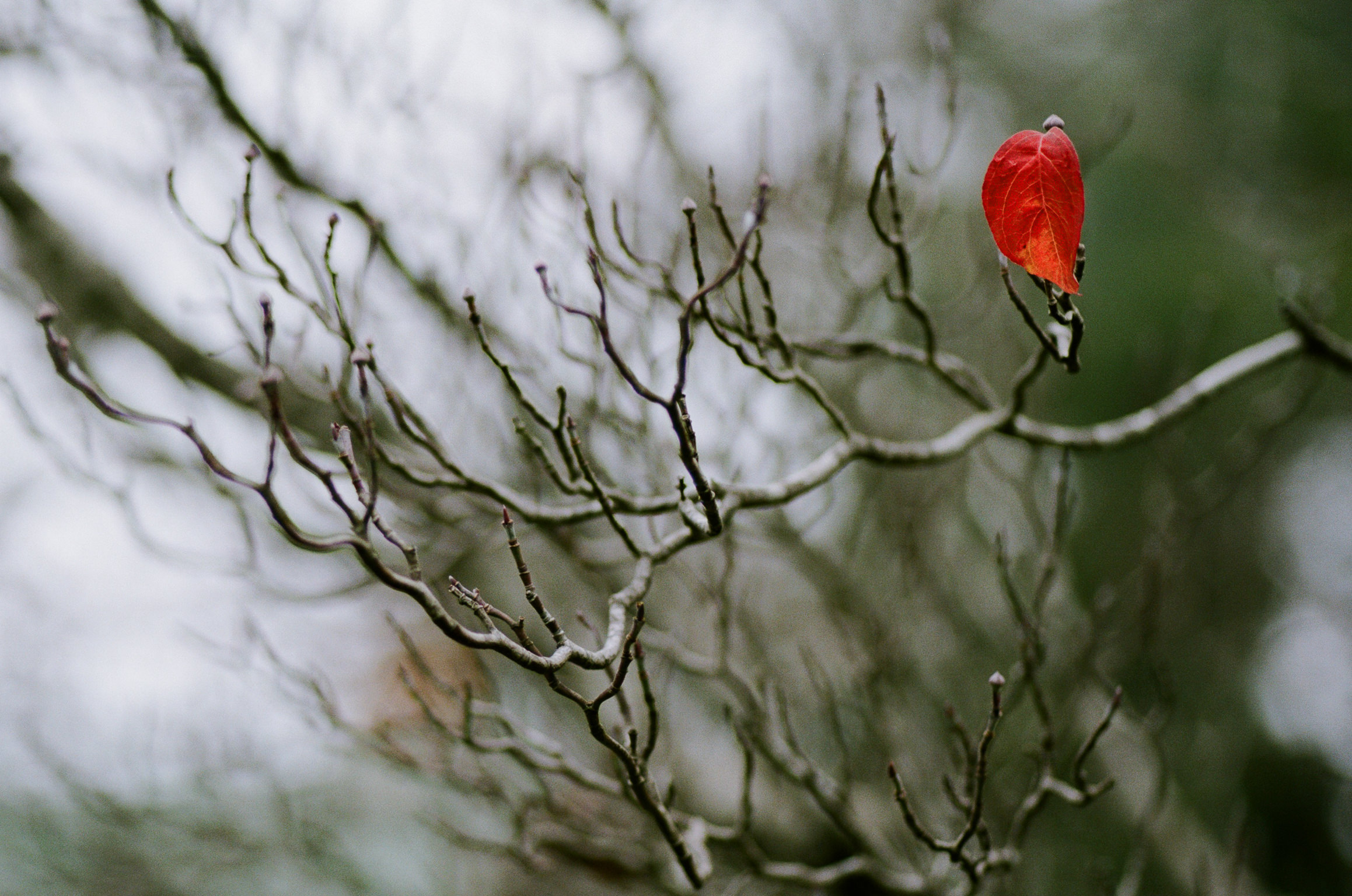 last-leaf-of-autumn-1.jpg