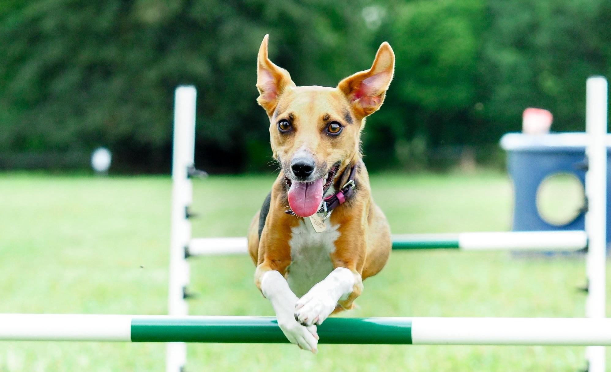 DOG WALKING FIELD -