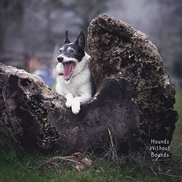 Oh sorry Patch, were we boring you? 😴 . . . . . . #dogphotographer #dogsofinstagram #olympusuk #dogoftheday #wiltshiredogphotographer #somersetdogphotographer #localbusiness #warminster #frome #salisbury #westbury #wiltshire #houndswithoutbounds #dogwalkingfields #wiltshiredogwalks #wiltshirecountryside #wiltshirelife #dogfriendlywiltshire #somersetdogwalks #somersetlife #dogfriendlysomerset #dogsofwiltshire #dogsofsomerset