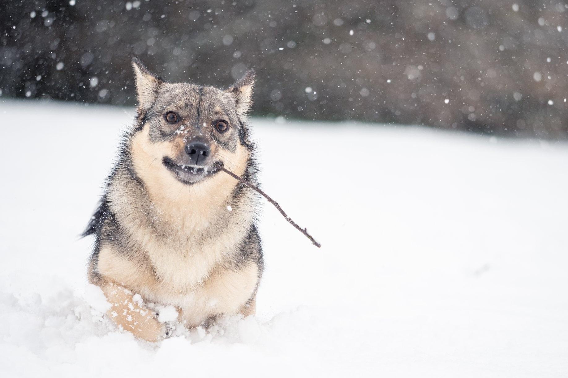 Marcie+Snow