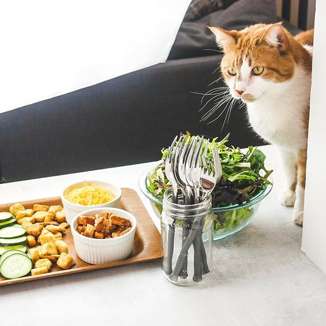 😂🐱Real life, y'all! Jack loves greens... like, he comes running when he smells fresh carrots with the tops on! As a vegetarian food blogger, I am ALWAYS trying to keep him out of my shots! #storybehindthephoto #behindthescenes #foodbloggerlife #nosycat #bloggerproblems