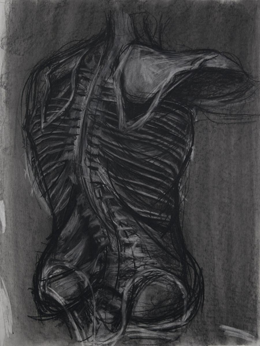 Anatomy Drawing, Skeleton