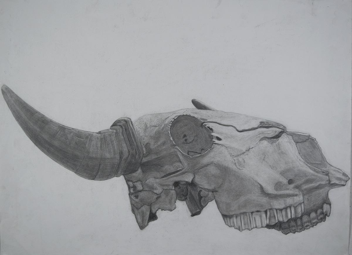 Foundation Drawing, Skull