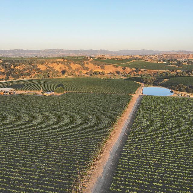 Can you spot our shadow?🕵🏼‍♂️ #welcometowinecountry #fly #pasorobles #hotairballoon #rides #grapeviews