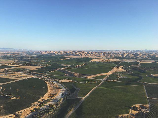 Gotta love these vineyard views 😉🍇 #fly #pasorobles #805 #slocal #travelpaso #hotairballoon #vineyards #summertime