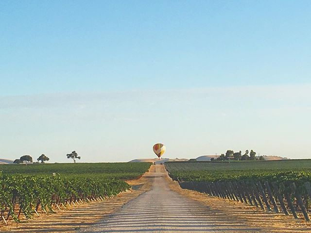 When the test from your optometrist's office becomes real life.....🤓😎 #fly #pasorobles #balloonsoverpaso #vineyard #vacation #staycation