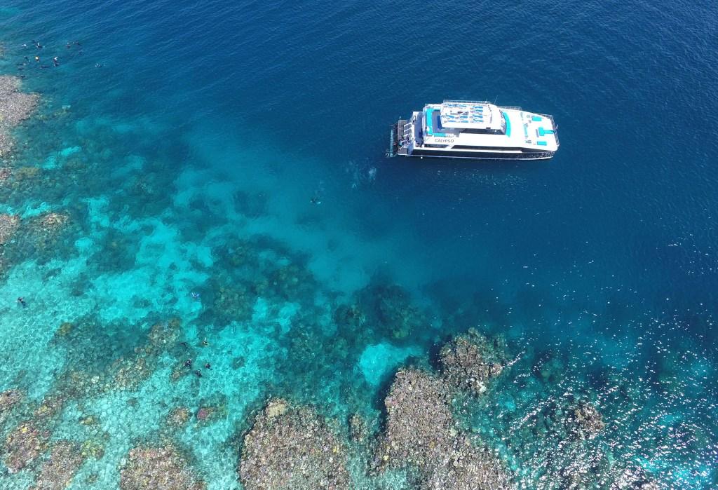 Photo Courtesy of Calypso Reef Charters