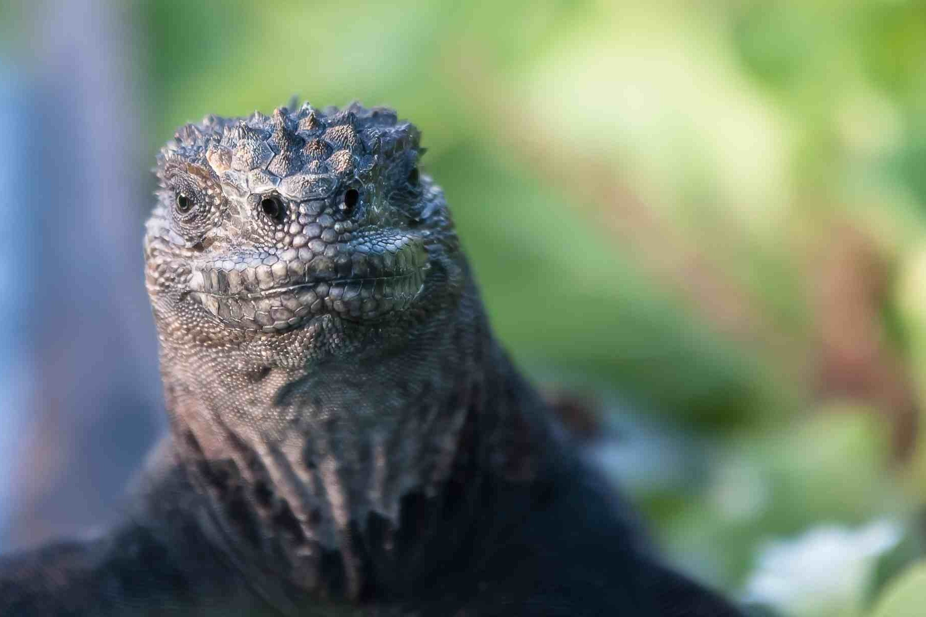 Galapagos Islands - Ecuador's Jurassic Park | Travel Story