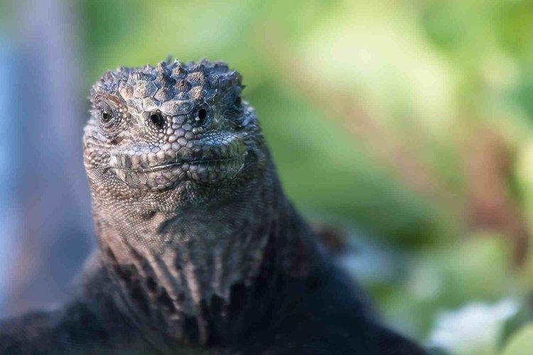 Ecuador's Jurassic Park - Wildlife Adventure   Galapagos Islands